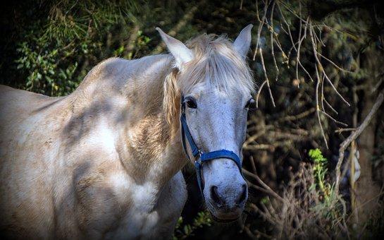 Horse, Equine, Equestrian, Horse Riding, Portrait, Mane