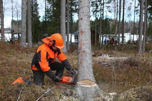 Forest, Logger, Tree, Six, Chainsaw, Off, Pour, Timber