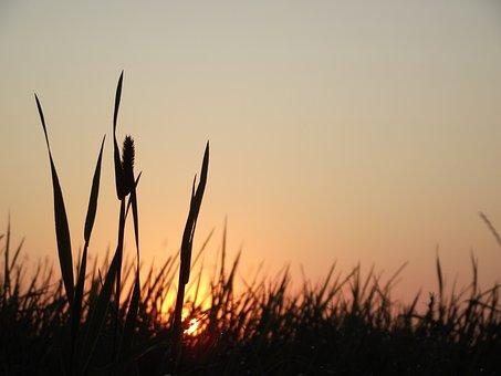 Sunrise, Meadow, Nature, Landscape, Sunset, Field