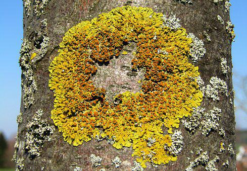 Tree, Log, Mushroom, Lichen, Nature, Moss, Plant