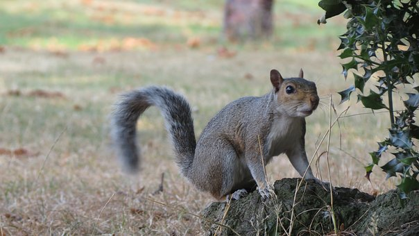 Squirrel, Forest, Animal, Rodent, Animals, Nature, Nuts
