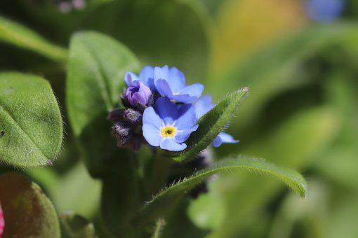 Blue Flowers, Spring, Nature, Fulfillment, Petals