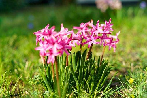 Spring, Flower, Plant, Easter, Warm, Summer, Blossom