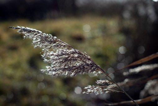 Straw, Plant, Nature, Sweden, Autumn, Flower