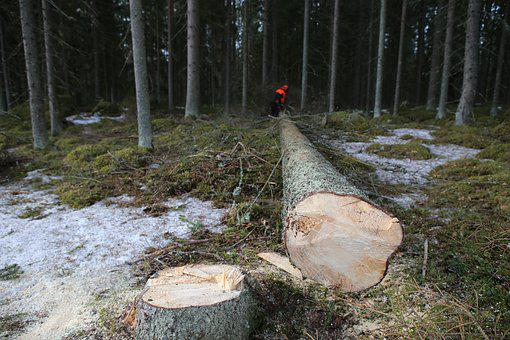Forest, Tree, Logs, Six, Collection, Log, Logger