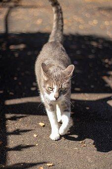 Cat, Portrait, Animal, Walking, White, Grey, Pet, Fur