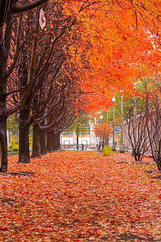Fall, Color, Orange, Trees, Leaves, Autumn, Colorful