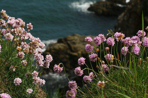 Bullers Of Buchan, Scotland, Sea-lavender, Landscape