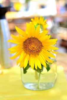 Sunflower, Yellow, Summer, Blossom, Bloom, Close Up