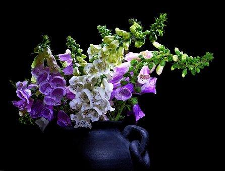 Digitalis, Black Background, Light Brush, Flowers