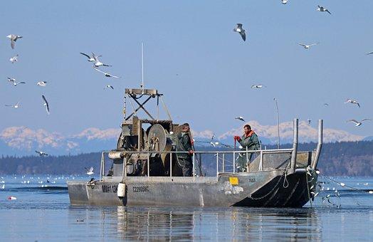 Fishing, Boat, Herring Run, Fisherman, Ocean
