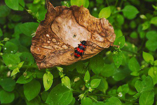 Beetle, Leaf, Forest, Insect, Nature, Macro, Red