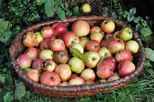 Apple, Fruit, Fresh, Apples In The Basket, Summer