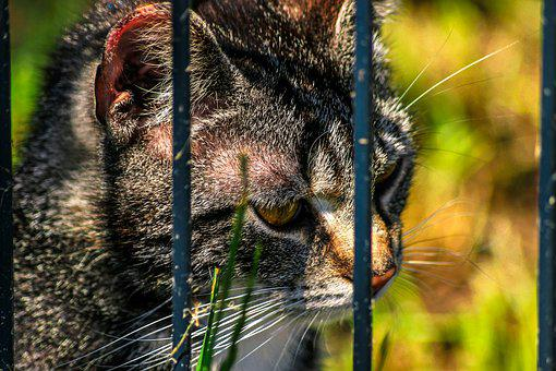 Cat, Close Up, Grid, Imprisoned, Animal Shelter, Animal