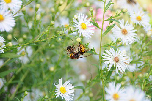 Hornet, Bee, Animals, Sting, Eat, Summer, Insect