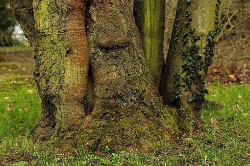 Tree, Log, Tree Root, Tree Bark, Tree Stump, Bark