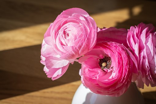 Ranunkeln, Pink, Flowers, Flower Vase, Vase, Petals