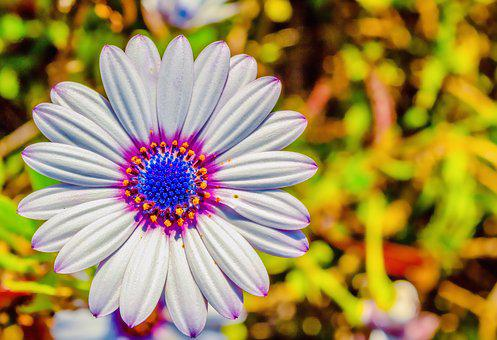 Flower, White, Pink, Purple, Violet, Blue, Yellow