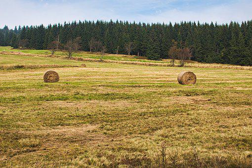 Straw Bales, Field, Landscape, Forest, Nature, Sky