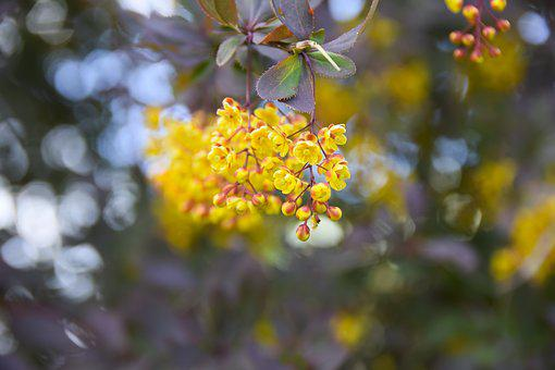 Flower, Nature, Yellow, Spring, Blossom, Plant, Branch