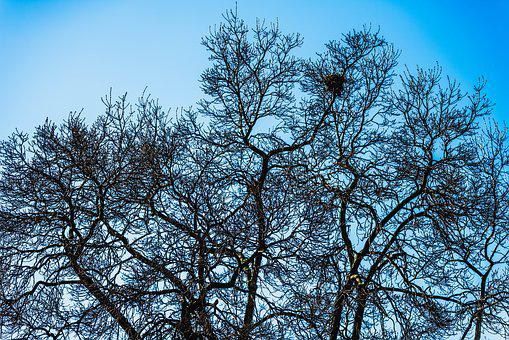Tree, Sky, Spring, Nature, Trees, Branch, Landscape