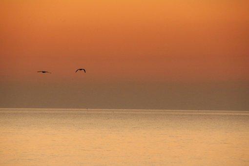 Sunset, Ocean, Orange, Sky, Peace, Pigeon, Nature
