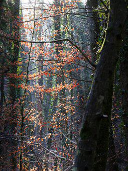 Forest, Trees, Light, Contrast, Color, Winter
