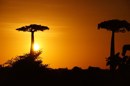 Madagascar, Baobab, Tree, Trunk, Africa, Nature, Sky