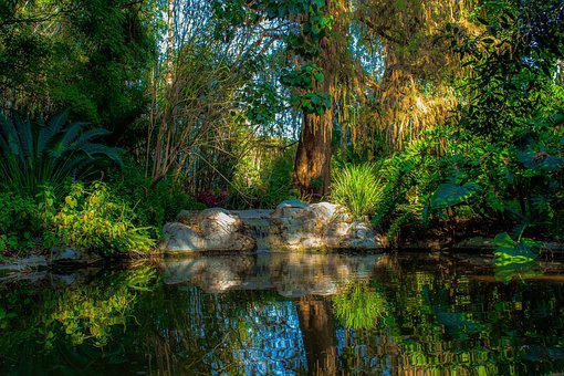 Pond, Peaceful, Nature, Water, Meditation, Calm