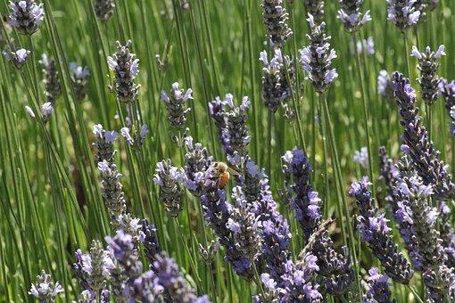 Spring, Equinox, Plant, Color, Flower, Blossom, Nature