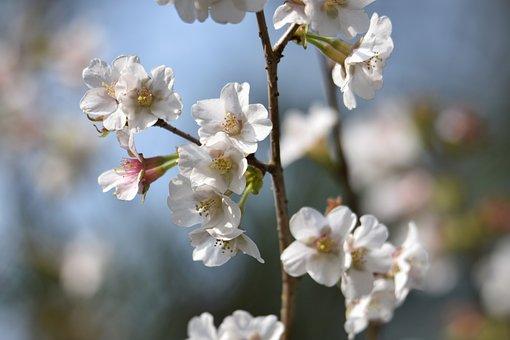 Natural, Landscape, Plant, Wood, Branch, Flowers