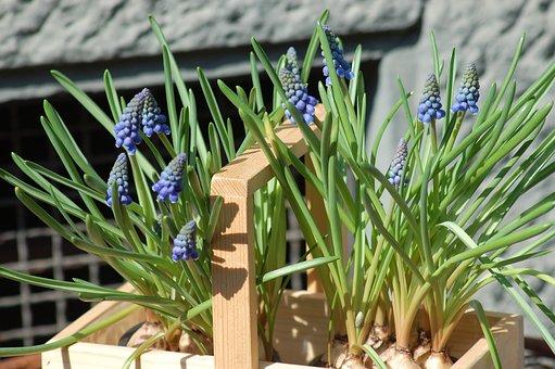 Bulbs, Bloom, Spring, Flower, Flowers
