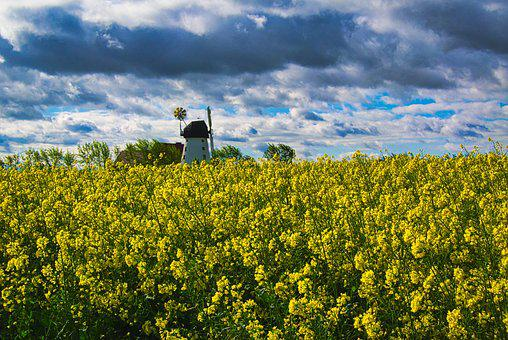 Field Of Rapeseeds, Windmill, Clouds, Landscape, Nature
