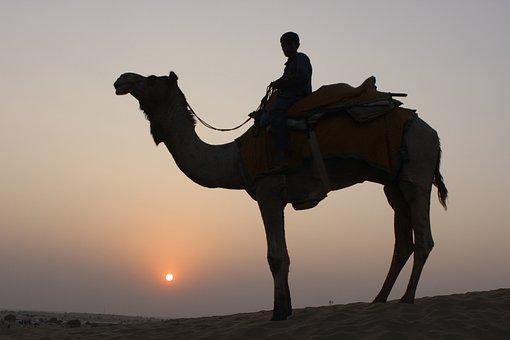 Camel, Camel Safari, Desert, Animal, Travel, Tourism