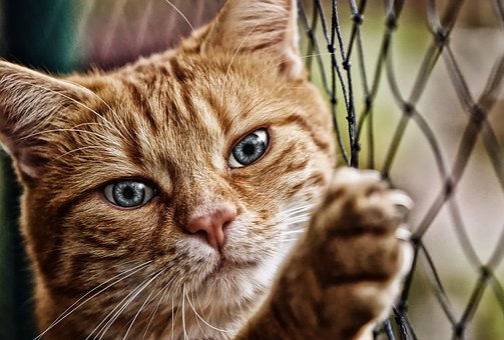 Cat, Red, Mackerel, Eyes, Funny, Pet, Domestic Cat