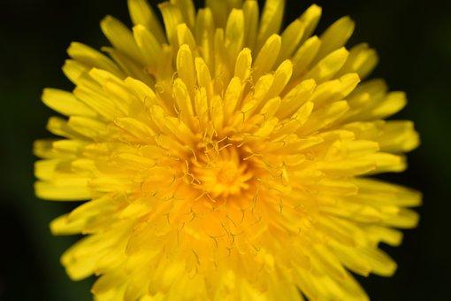 Flower, Fleur Des Champs, Stamens Flower, Pistil Flower
