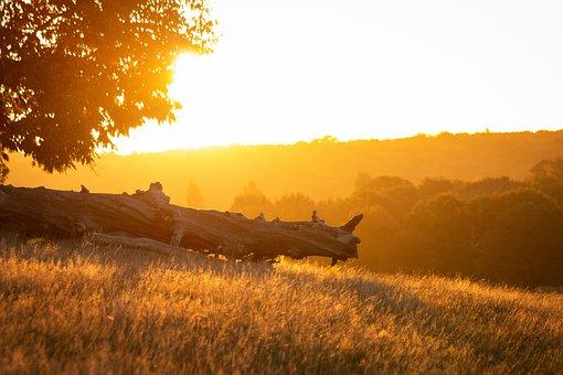 Sunrise, Park, Richmond, Glow, Golden, Landscape, Trees