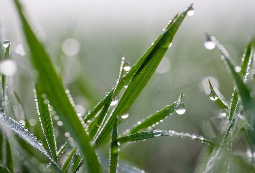 Grass, Dew, Nature, Meadow, Green, Water, Close Up