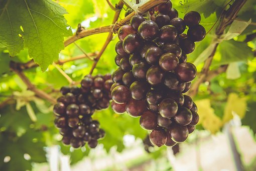 Grape, Fruit, Grapes, Vine, Healthy, Green, Harvest