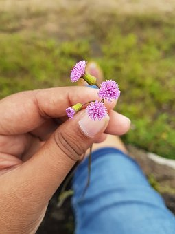 Flower, Mini, Hands, Travel