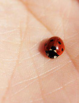 Ladybug, Hand, Skin, Red, Lucky Charm, Insect, Beetle