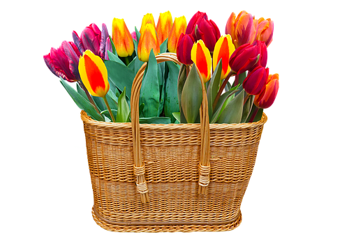 Nature, Flowers, Spring, Tulips, Isolated, Basket