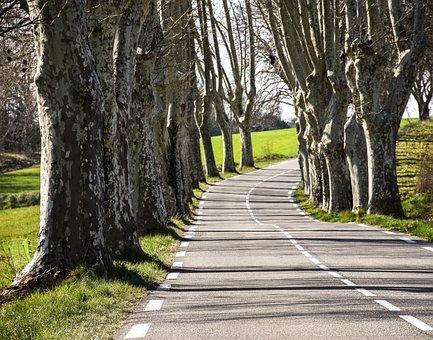 Tree Lined, Trees, Landscape, Scenery, Greenery, Road