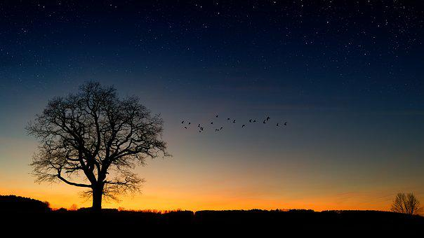 Tree, Evening Sky, Birds, Star, Mood, Nature