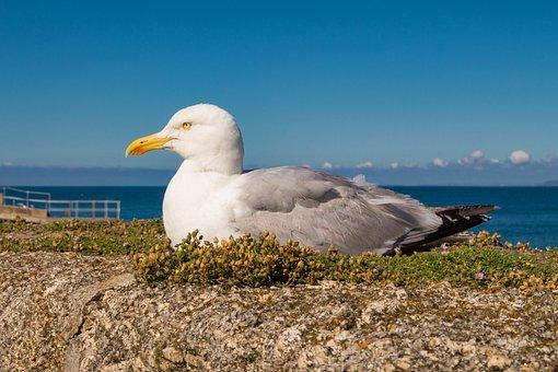 Seagull, Sea, Water, Sky, Bird, Wall, Moss, Seevogel