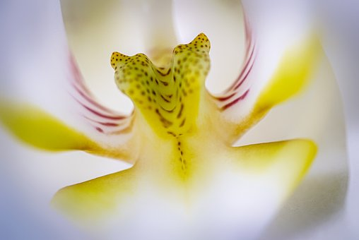 Orchid, Flower, Blossom, Bloom, Plant, Flora, Tropical