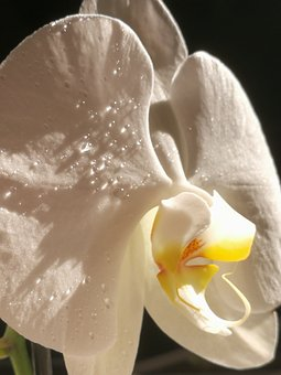 Nature, Beautiful, Orchid, Blossom, Bloom, Plant