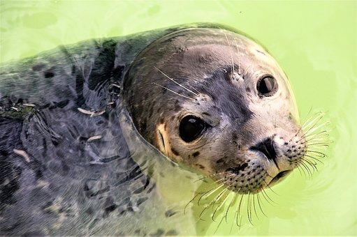 Seal, Texel, Aquatic Animal, Shelter, Seal Sanctuary