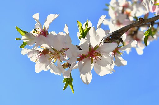 Spring Flower, Spring, Kikelet Pansio, Nature, Flower