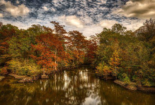 Cypress Trees, Forest, Woods, Swamp, Water, Pond